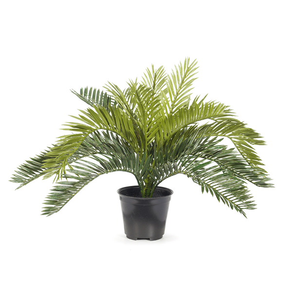 Palm Cycad in Pot Green 30cm