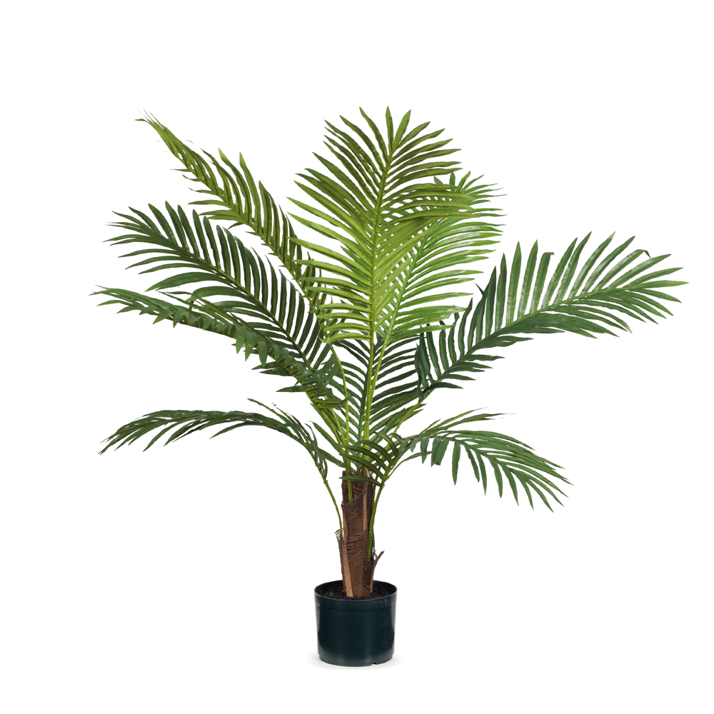 Palm Kentia Green 106cm