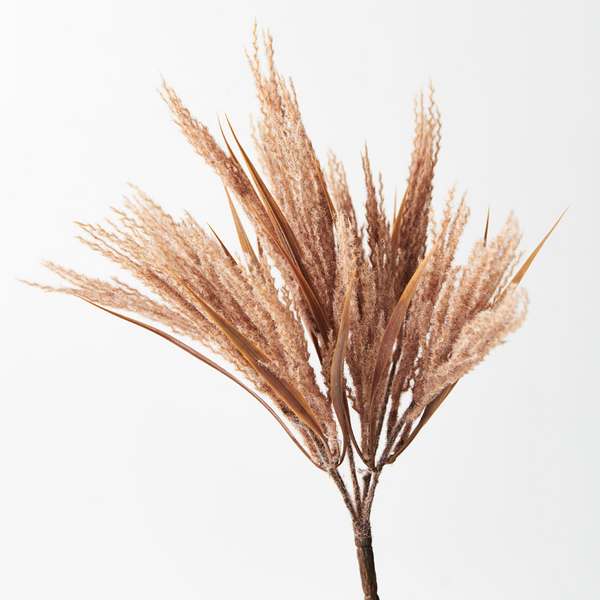 Plume Grass Bush- Toffee