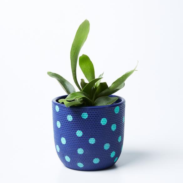 Spot Navy Mint Pot
