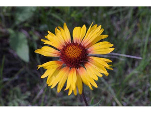 Easy to Grow Wildflower Seed Mix