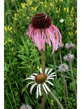 Load image into Gallery viewer, Lakeshore Wildflower Seed Mix