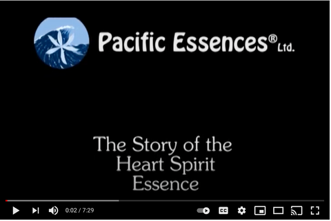 Pacific Essences - How the Heart Spirit Essence came to be
