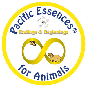Endings & Beginnings for Animals