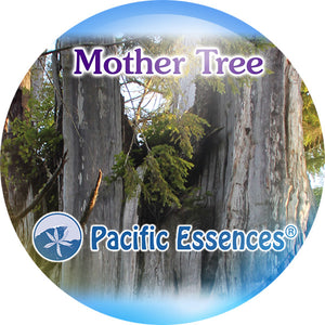 Mother Tree