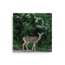 Load image into Gallery viewer, DEER | Canvas