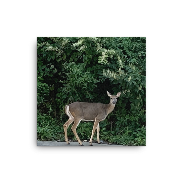 DEER | Canvas
