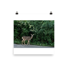 Load image into Gallery viewer, DEER | Poster