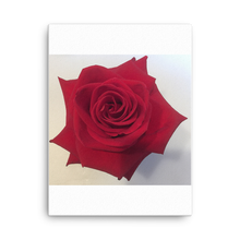 Load image into Gallery viewer, ROSE | Canvas
