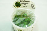 Selection of 1-2-Grow plants.