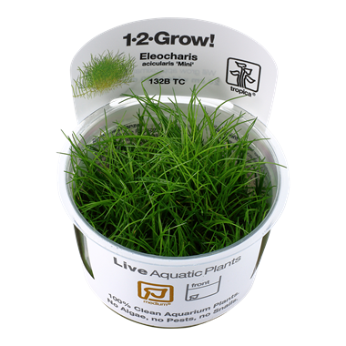 Eleocharis acicularis 'Mini' Tropica 1-2-Grow Medium Carpeting Plant