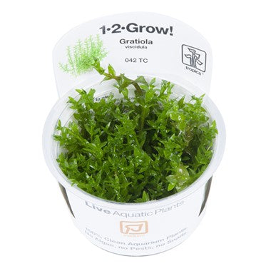 Gratiola viscidula Tropica 1-2-Grow Medium Plant