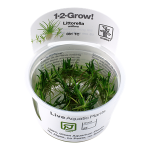 Littorella uniflora Tropica 1-2-Grow Easy Plant