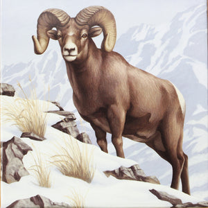 2014 - Canada - $100 - Rocky Mountain Bighorn Sheep - Matte Proof