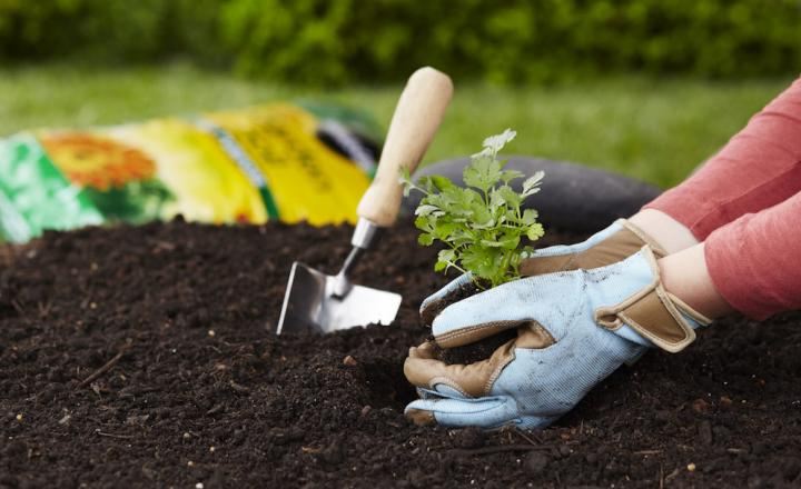 10 Top Gardening Tips for Beginners