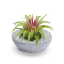 Load image into Gallery viewer, Simple Candle and Air Plant Holder