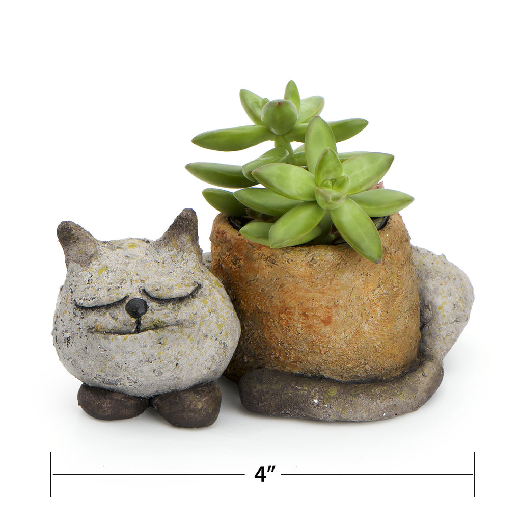 Sleepy Kitty Planter