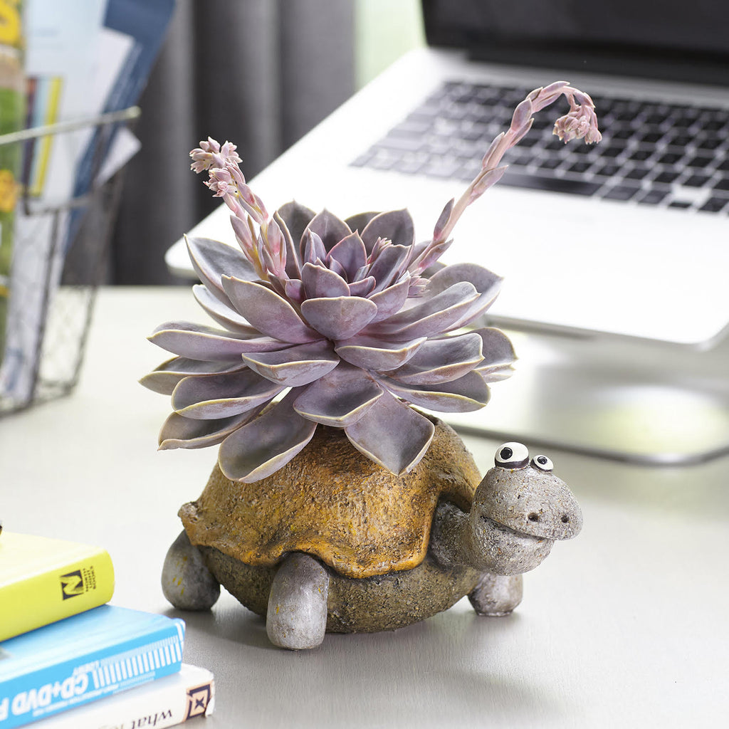 Pogo the Turtle Planter
