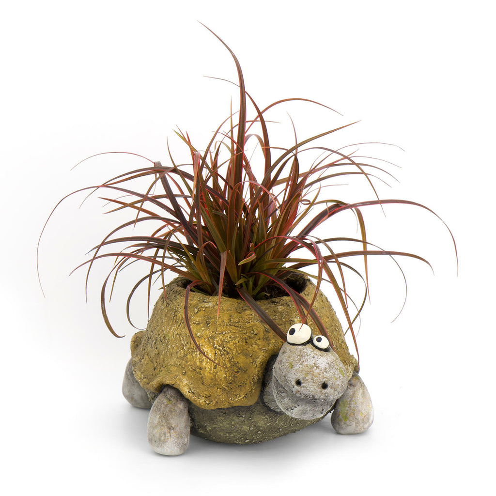 Pogo the Tortoise Planter