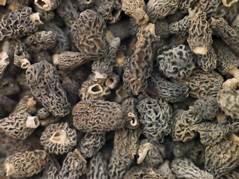 wild Yukon morel mushrooms