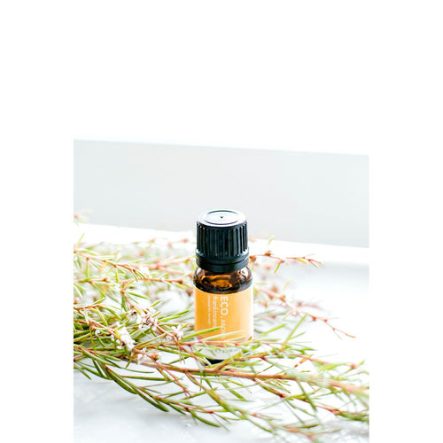 Frankincense Essential Oil - Eco Modern Essentials