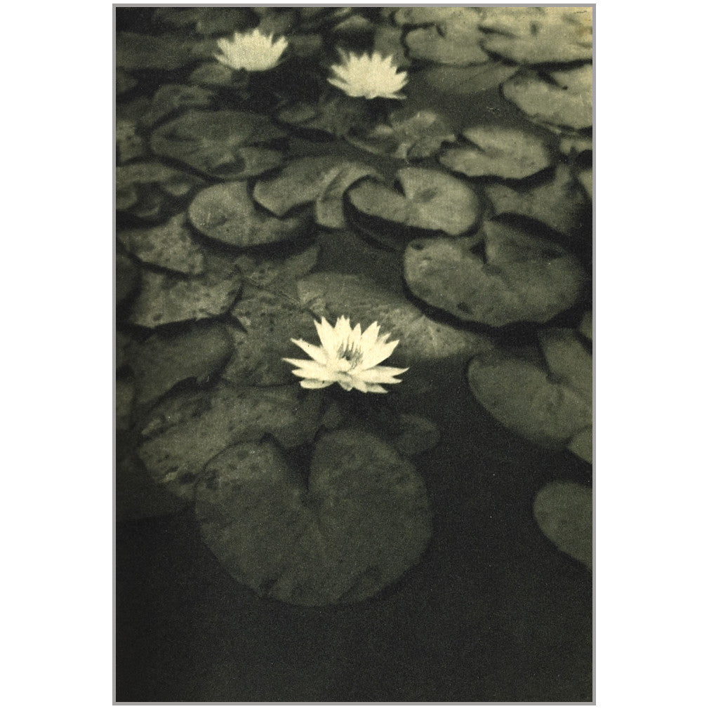 The Intelligence of Flowers photographs by Alvin Langdon Coburn