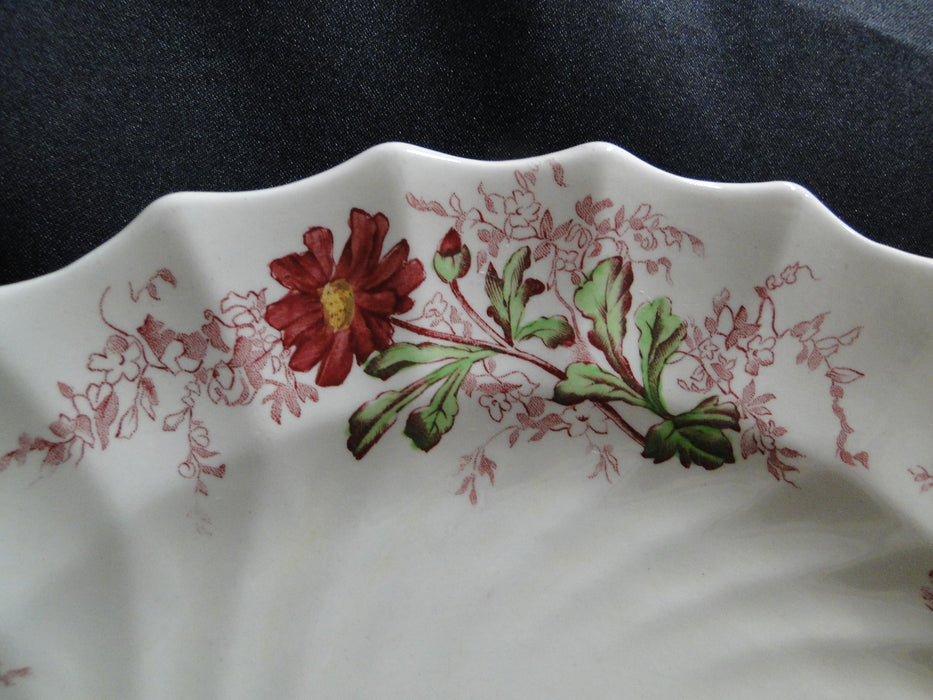 Spode Fairy Dell, Multicolored Florals, Swirl Rim: Dinner Plate (s) 10 1/2""