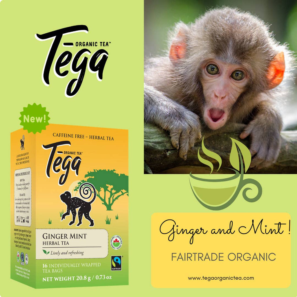 Organic Ginger Mint Tea | Pack of 16