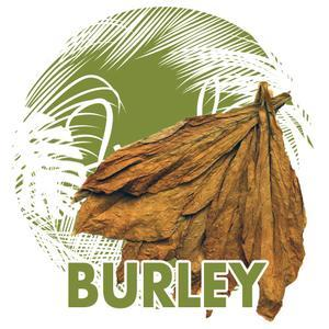 Burley - Jungle Flavours