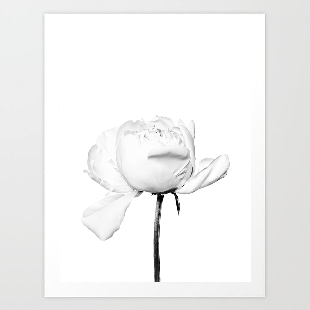 Single Rose | Art Print