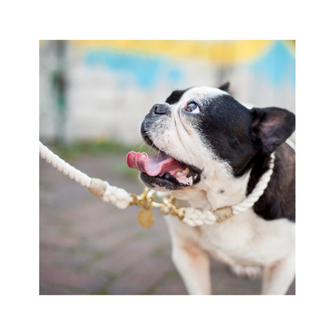 Berry Zoo | Dog Lead CREAM GOLD