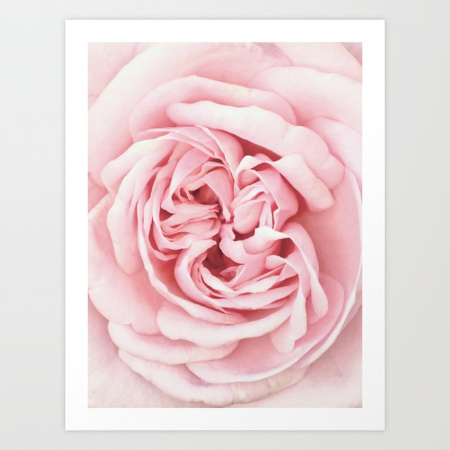 Close up pink rose centre modern art prints
