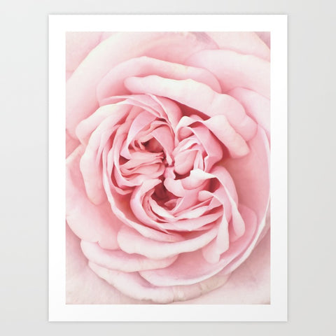 Pink Rose Art Print | Large