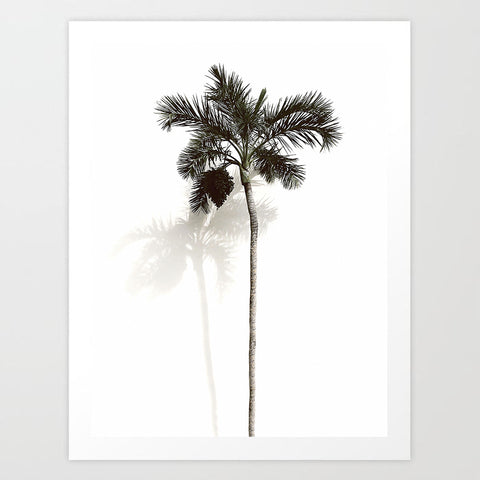 Tall Palm | Art Print