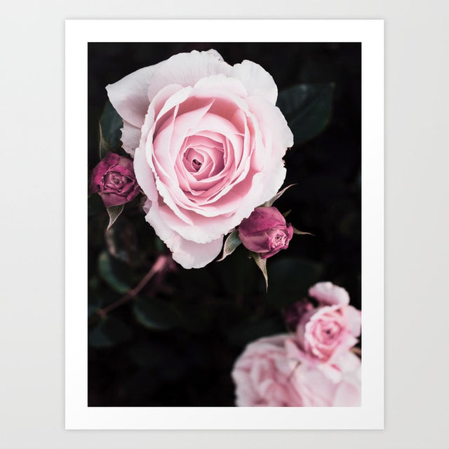 Rose Dark Modern Art Print