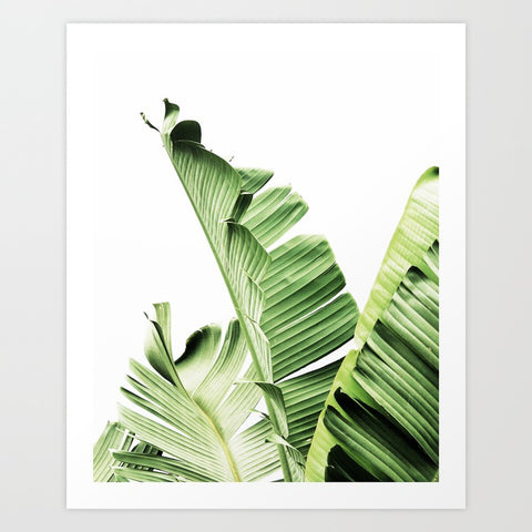 Banana Leaf Print | Large