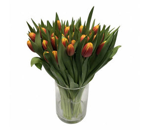 Tulpen Dow Jones (Orange-Gelb) 10 Stück