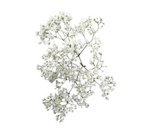 "Laden Sie das Bild in den Galerie-Viewer, Schleierkraut ""Gypsophila paniculata"" 5 Stiele Million Star Weiß"