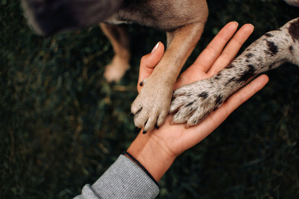 Ag-Alchemy Sustainability Paws in Hand