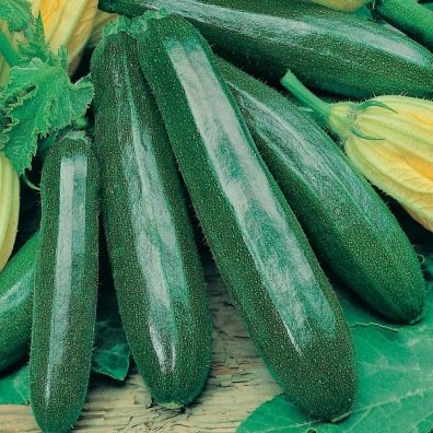 "Courgette Black Beauty (graines) - ""Semailles"""