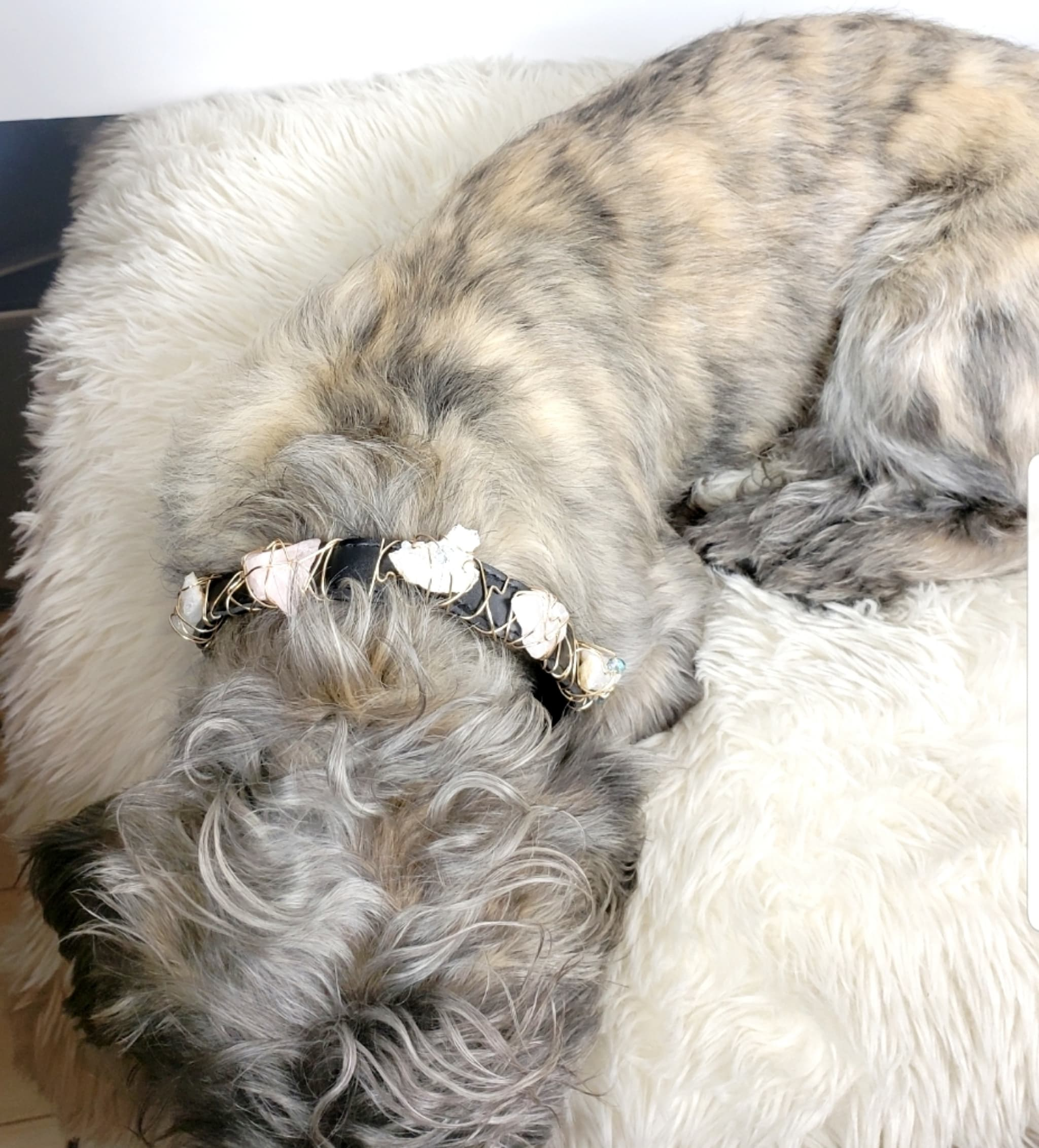 Happiness Dog Collar