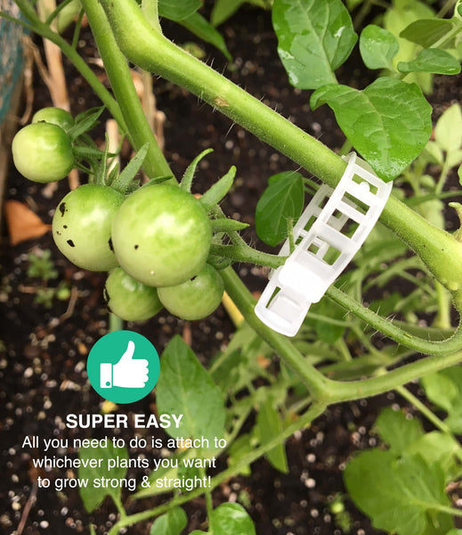 Crop Clips Trellis Clips, Perfect for Vine Vegetables, Tomatoes