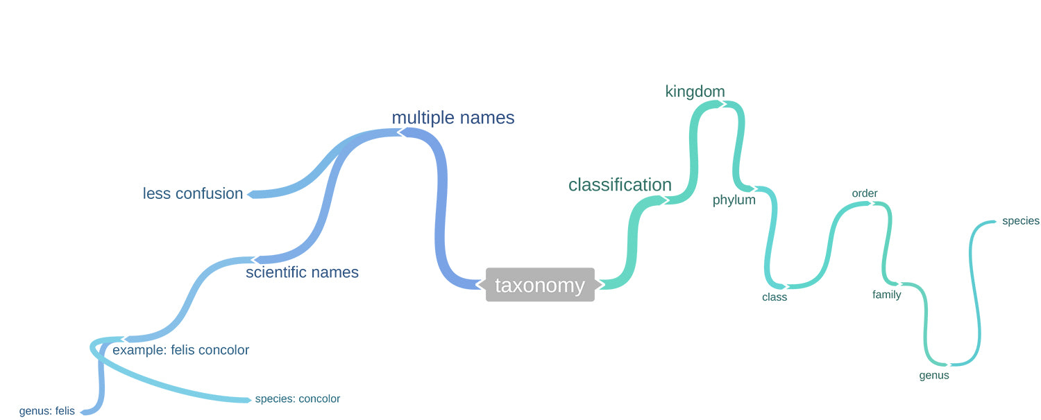 1. Image of mind map pre-game play
