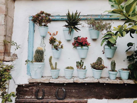 Succulents in pots on a wall