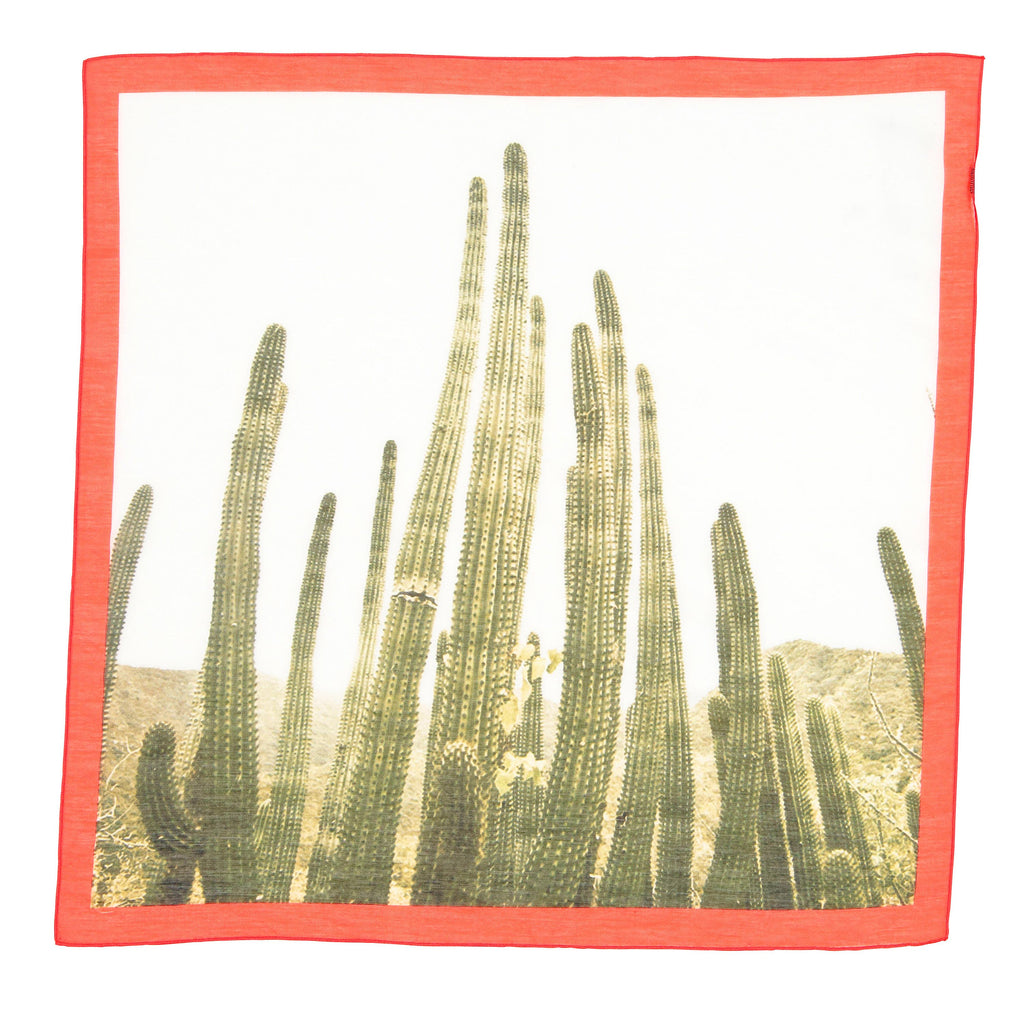 palm springs | cactus line up