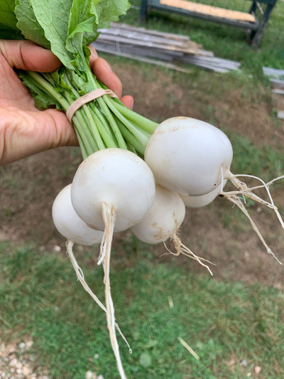 Hakurei Turnips, Cooked and Raw