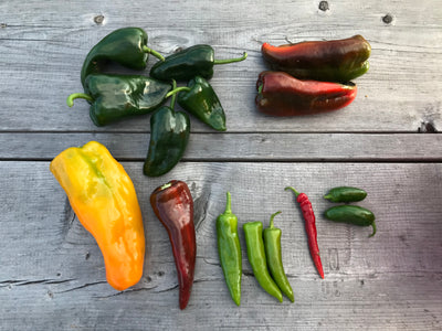 Pepper Primer, Part 2 - Green Chili Two Ways