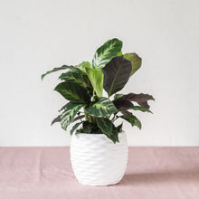 Load image into Gallery viewer, GREEN PLANT