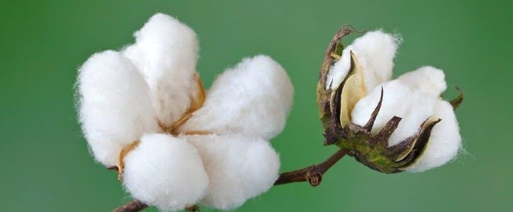 Organic Cotton vs Regular Cotton : What's the Difference?