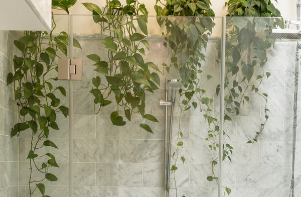 beautiful shower with greens hanging from ceiling symbolizing the art of showering as part of K-beauty influenced holistic skincare habits and rituals